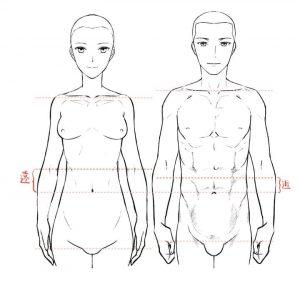 男女の体型の違い