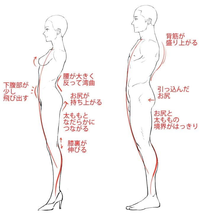 男女の体型の違い横ver